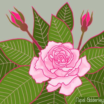 Roses (144-1)